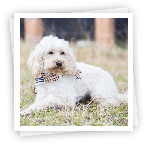 Waratah-Park-Puppies-