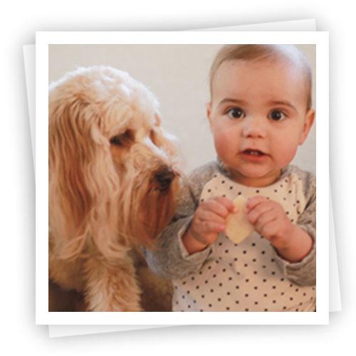 Waratah-Puppies-8